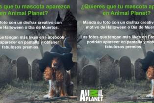 Animal Planet combina mascotas y disfraces en la Fiesta de los sustos