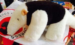 interna panda 1