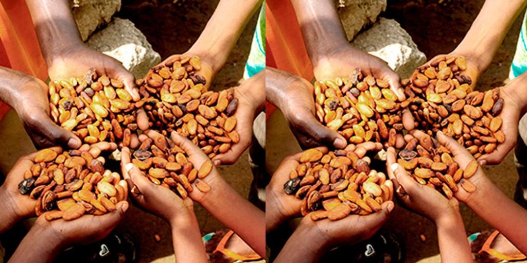 multi-cacao