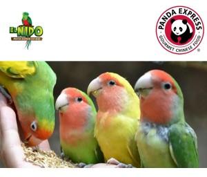 aviario 1