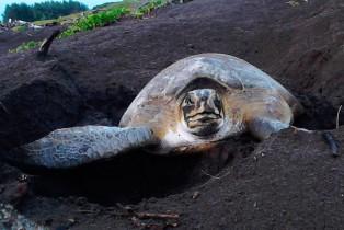Campaña en apoyo a las tortugas marinas Panda Express y Fundación Yépez