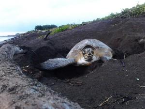 tortugas 1
