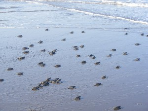 tortugas 2