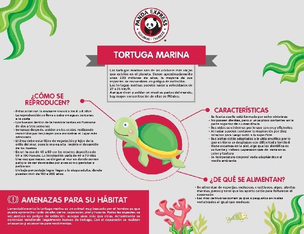 tortugas 4