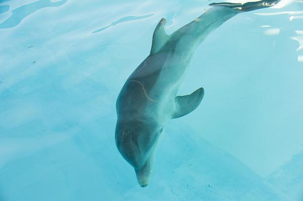 delfin-interno-1