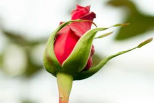 Chocolates y flores, regalos preferidos para el día del amor y la amistad