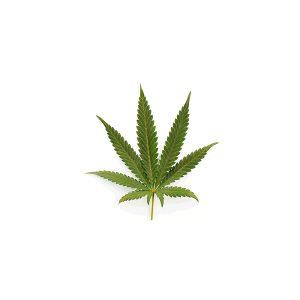 interna mariguana 1